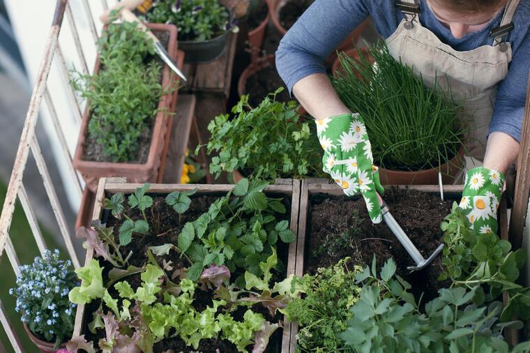 Pretvorite balkon od 5 kvadrata u povrtnjak i dobićete 10 kg povrća.